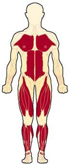 مرض ضمور العضلات ، اسباب و علاج و مسببات ضمور العضلات